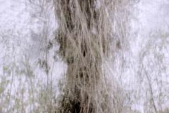 zonder titel (landschap #1) - € 375 - formaat 65x50cm