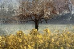 zonder titel (landschap #3) - € 325 - formaat 50x50cm