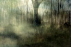 zonder titel (landschap #7) - € 400 - formaat 50x75cm