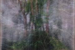 zonder titel (landschap #9) - € 400 - formaat 50x75cm