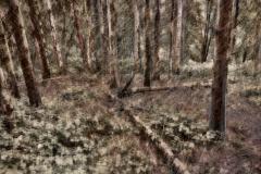 zonder titel (landschap #12) - € 325 - formaat 40x50cm
