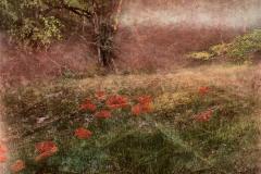 zonder titel (landschap #14) - € 300 - formaat 40x50cm