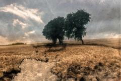 zonder titel (landschap #16) - € 325 - formaat 50x50cm